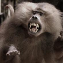 צייד פרפרים, מפחלץ חיות ורועה צאן נכנסים לבר: על סרטו של אוהד מילשטיין ״כוכבי לכת״